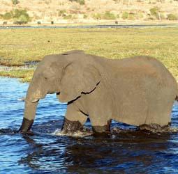 thumbnail Rondreis - Het beste van Botswana