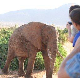 thumbnail Familiereis Kenia