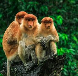 thumbnail Groepsrondreis Maleisisch Borneo