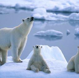 thumbnail Rondreis Spitsbergen