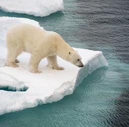 thumbnail Groepsrondreis Spitsbergen