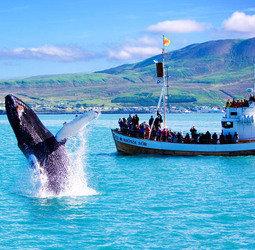 thumbnail Familiereis IJsland