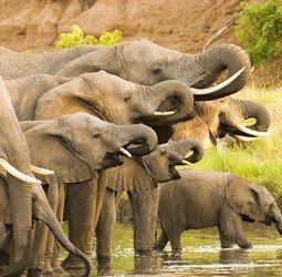 thumbnail Familiereis Namibi�, Botswana en Zimbabwe