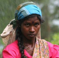 thumbnail Groepsrondreis Sri Lanka Hoogtepunten