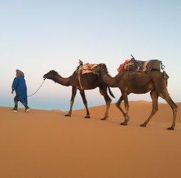 thumbnail Groepsrondreis Marokko Totaal