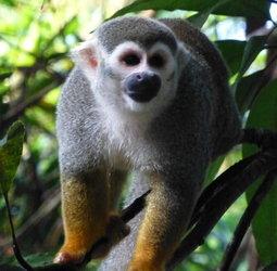 thumbnail Familiereis Suriname