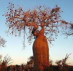 thumbnail Rondreis Madagascar