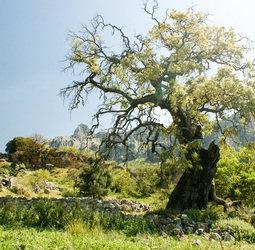 thumbnail Wandelvakantie Spanje - Andalusi�