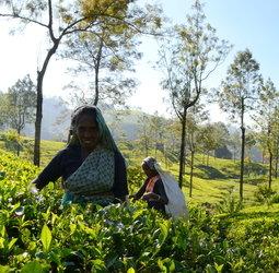 thumbnail Groepsrondreis Sri Lanka en Malediven