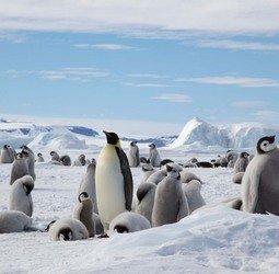 thumbnail Rondreis Rondreis Antarctica - Snow Hill eiland