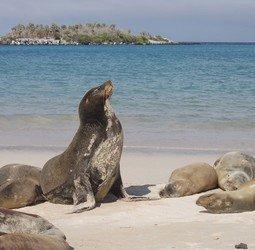 Rondreis Galapagoseilanden