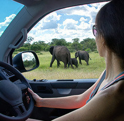 thumbnail Familiereis Privé Selfdrive Zuid-Afrika