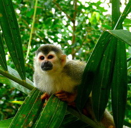 thumbnail Familiereis Costa Rica duurzaam familiereis
