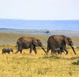 thumbnail Rondreis - Vrouw op Reis naar Kenia