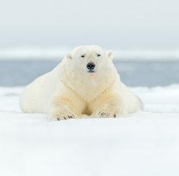 thumbnail Groepsrondreis Van IJsland naar Groenland & Spitsbergen