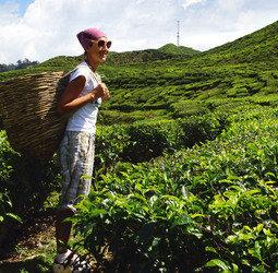 thumbnail Groepsrondreis West-Maleisi� & Borneo