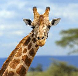 thumbnail Familiereis Zuid-Afrika Tuinroute & Kruger