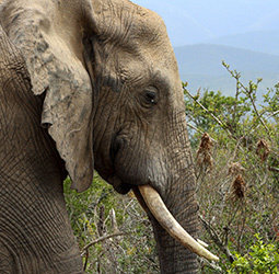 thumbnail Groepsrondreis Zuid-Afrika Tuinroute