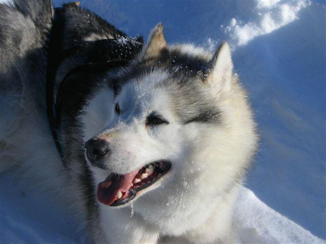 Sfeerimpressie Lapland Winter: Sneeuwsafari nabij de poolcirkel
