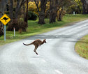 Pas op voor Kangoeroes