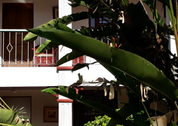 foto La Rosa del Paseo hotel