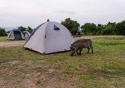 foto Lake Mburo Campsite