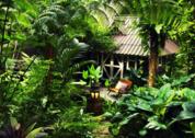 foto Rainforest Resort Phitsanulok
