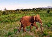 foto Samburu Camp