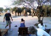 foto Elephant Sands