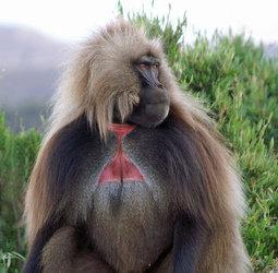 thumbnail Rondreis Ethiopi� - noord