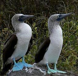 Rondreis Galapagoseilanden afbeelding