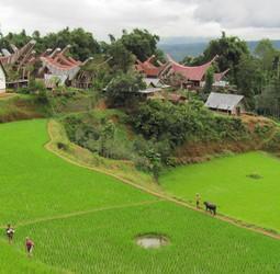Groepsrondreis Sulawesi