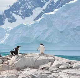 Rondreis Antarctica, Falklands en South Georgia