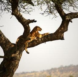 thumbnail Rondreis Tanzania en Zanzibar Totaal