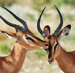 thumbnail Rondreis Namibië kampeer