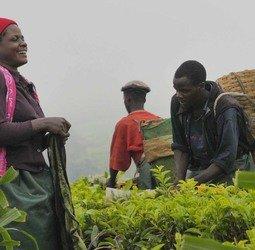 thumbnail Rondreis Zambia, Malawi en Tanzania