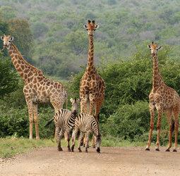 Familiereis Zuid-Afrika en Swaziland - kort