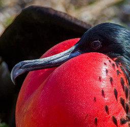 Groepsrondreis Galapagoseilanden
