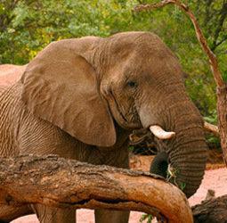 thumbnail Rondreis Namibi�, Botswana & Zuid-Afrika