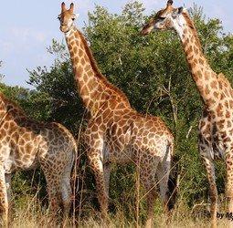 thumbnail Rondreis Zuid-Afrika & Mozambique Pop-Up