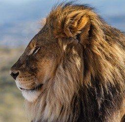thumbnail Rondreis Zuid-Afrika Tuinroute & Kruger