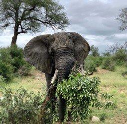 Groepsrondreis Zuid-Afrika Tuinroute/Kruger