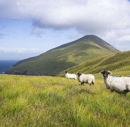 Groepsrondreis Noord Ierland Ierland