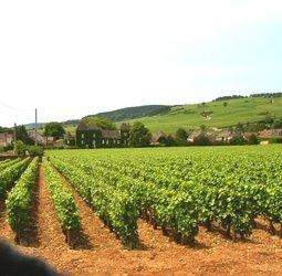 Fietsvakantie Frankrijk - Bourgondië