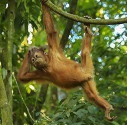 Familiereis Privé Indonesië: Sumatra, Java en Bali afbeelding