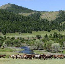 thumbnail Rondreis met Dragoman door Mongolië