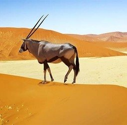 Rondreis Zuidelijk Afrika - kampeerreis