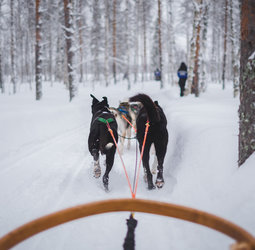 thumbnail Groepsrondreis Lapland Winter - Kylmäluoma
