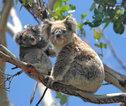 Australië rondreis