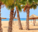 Palmbomen - Kaapverdië